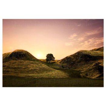 Sycamore Gap at Hadrian's Wall Photo Print by Daniel Dent